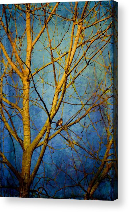 Trees Acrylic Print featuring the photograph Bird's The Word by Jan Amiss Photography