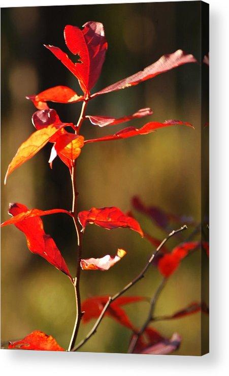 Foliage Acrylic Print featuring the photograph Blazing Fire by Lori Mellen-Pagliaro