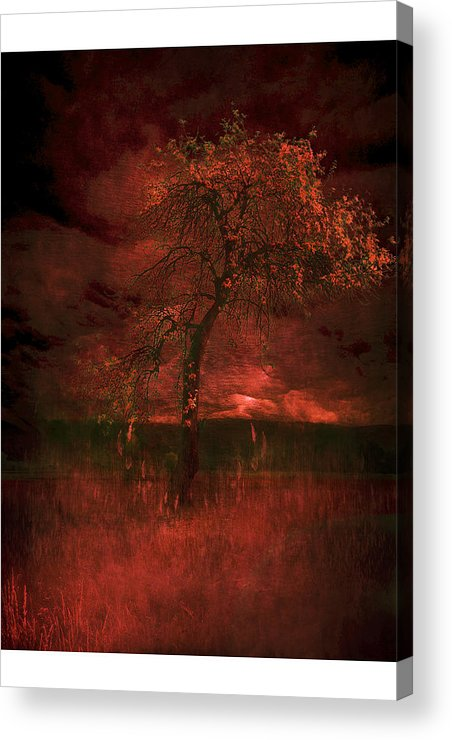 Acrylic Print featuring the photograph Bloody Tree by Zygmunt Kozimor