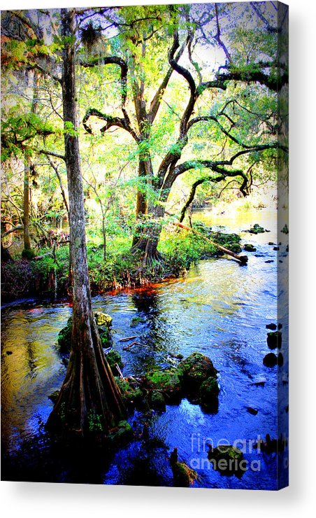 Florida Acrylic Print featuring the photograph Blues In Florida Swamp by Carol Groenen