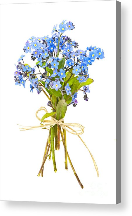 Bouquet Acrylic Print featuring the photograph Bouquet Of Forget-me-nots by Elena Elisseeva