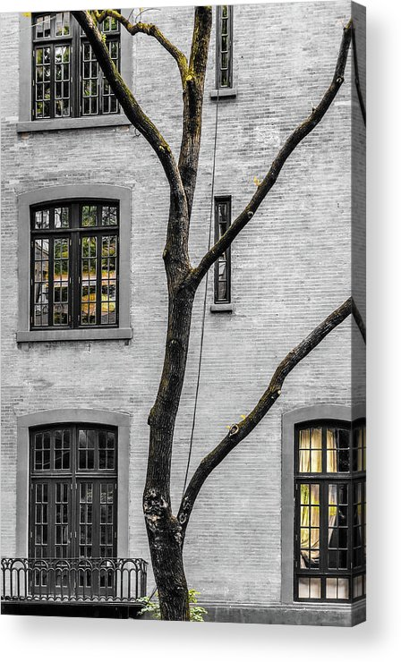 Windows Acrylic Print featuring the photograph Branches And Windows by Cate Franklyn