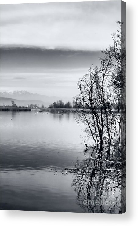 Reflection Acrylic Print featuring the photograph Branches by Gabriela Insuratelu