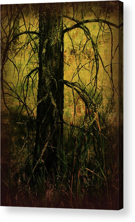 Mixed Media Acrylic Print featuring the photograph Branching Out by Bonnie Bruno