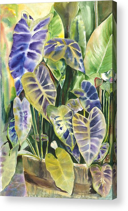 Foliage Of A Taro Plant In Water Acrylic Print featuring the painting Bucket Of Purple Taro by Ileana Carreno