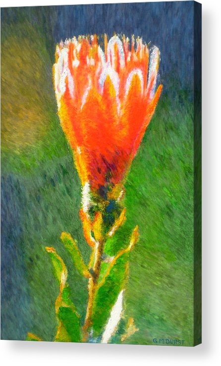 Protea Acrylic Print featuring the painting Budding Protea by Michael Durst