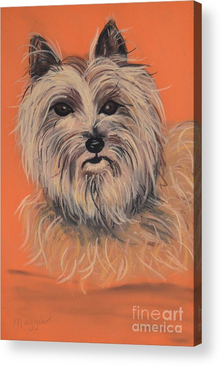 Cairn Terrier Acrylic Print featuring the pastel Cairn Terrier by Christine Crosby
