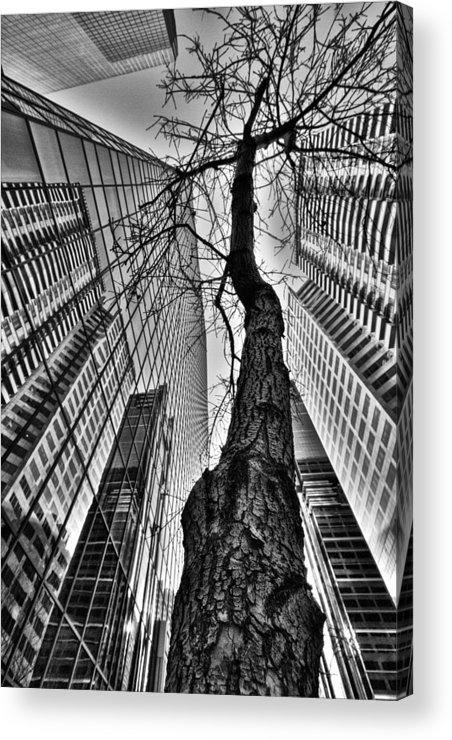 4th Ave Sw Acrylic Print featuring the photograph Captive And Captivated In Cowtown by Russell Styles