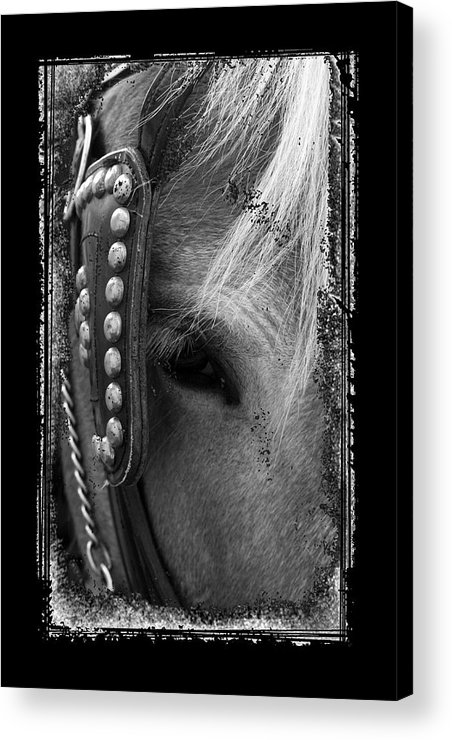 Horse Acrylic Print featuring the photograph Carriage Horse B And W by David Dunham