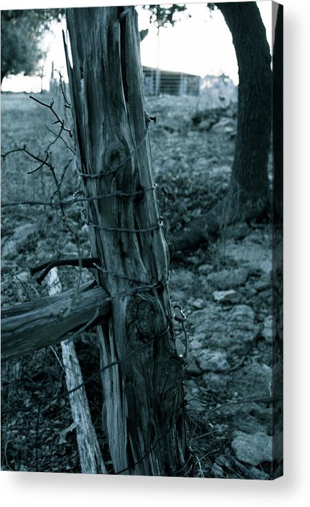 Cedar Acrylic Print featuring the photograph Cedar Post by Sherry Klander