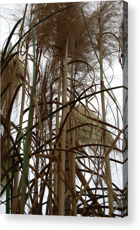 Nature Acrylic Print featuring the photograph Chaos by Rozalia Toth