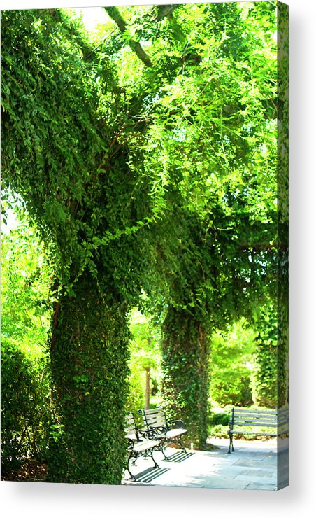 Photo Acrylic Print featuring the photograph Charleston Ivy 2 by Alan Hausenflock