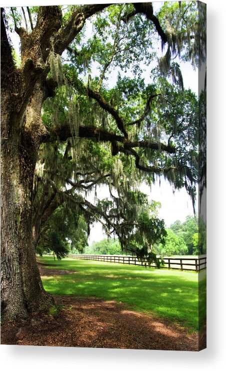 Photo Acrylic Print featuring the photograph Charleston Oaks 5 by Alan Hausenflock