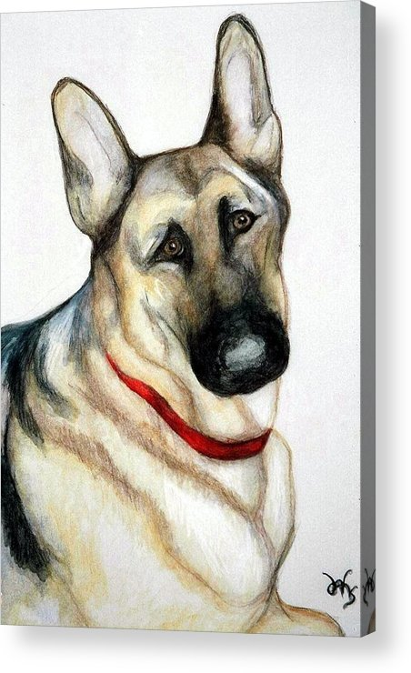 German Shepherd Pet Potraits Acrylic Print featuring the painting Chief by Debra Sandstrom