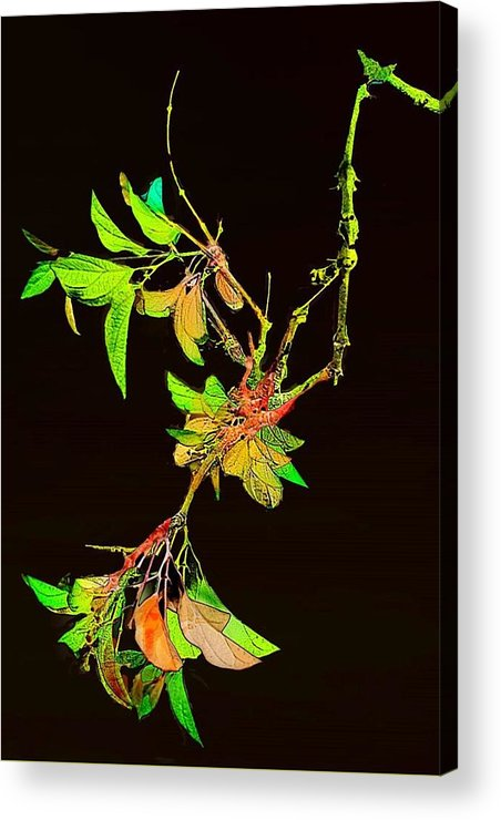 Branch Acrylic Print featuring the photograph Colored Leaves by Lynn Andrews