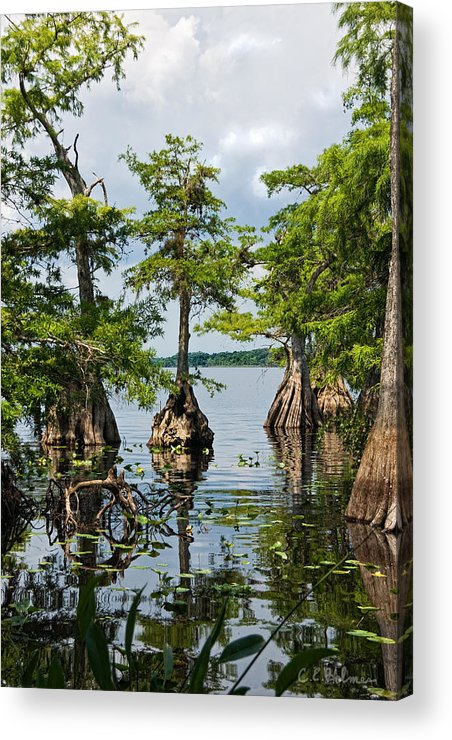Trees Acrylic Print featuring the photograph Cypress Reflections by Christopher Holmes