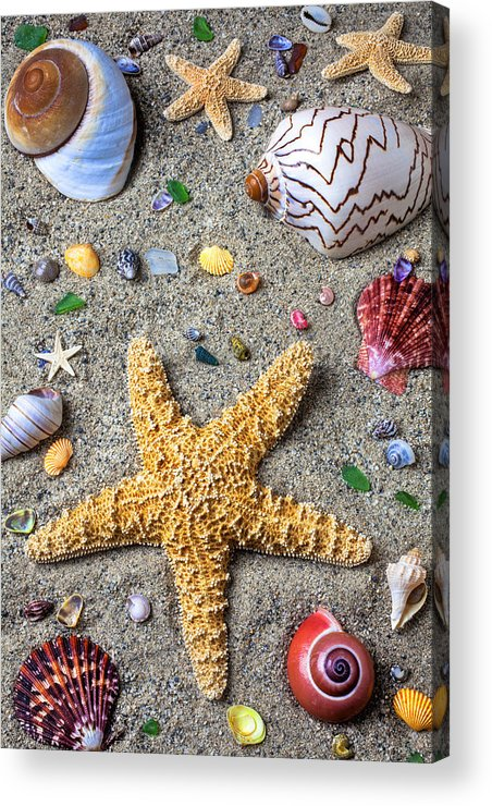 Starfish Acrylic Print featuring the photograph Day At The Beach by Garry Gay