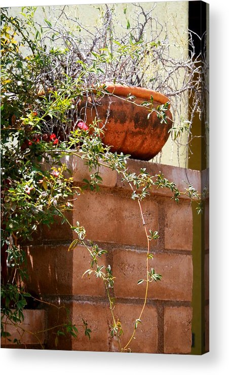 Brick Acrylic Print featuring the photograph Dead Or Alive by Bob Gardner