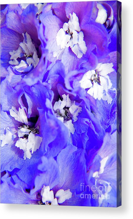 Nature Acrylic Print featuring the photograph Delphinium Flowers by Julia Hiebaum