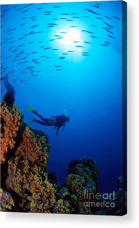 Bubble Acrylic Print featuring the photograph Diving Scene by Ed Robinson - Printscapes