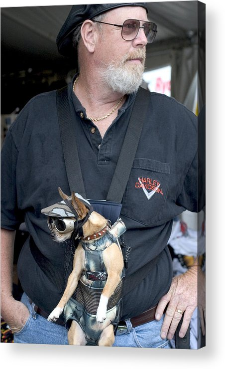 Cute Acrylic Print featuring the photograph Doggie Biker by Carl Purcell