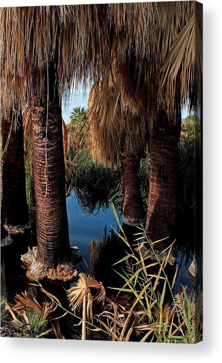 Oasis Acrylic Print featuring the photograph Dos Palmas Oasis by David Salter
