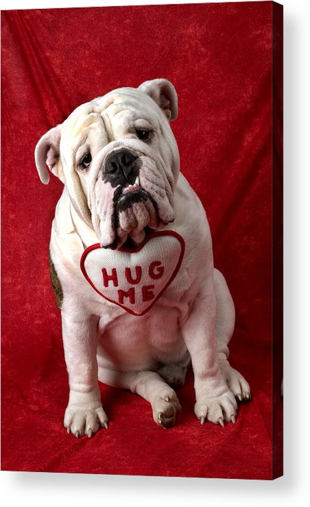 Dog Acrylic Print featuring the photograph English Bulldog by Garry Gay