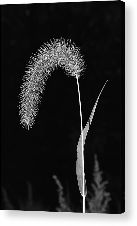Grass Acrylic Print featuring the photograph Fall Grass 1 by Mark Fuller