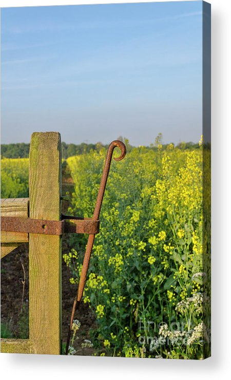 Gate Acrylic Print featuring the photograph Farm Gate Latch by Steev Stamford