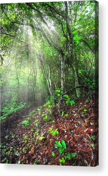 Appalachia Acrylic Print featuring the photograph Finding Inspiration by Debra and Dave Vanderlaan