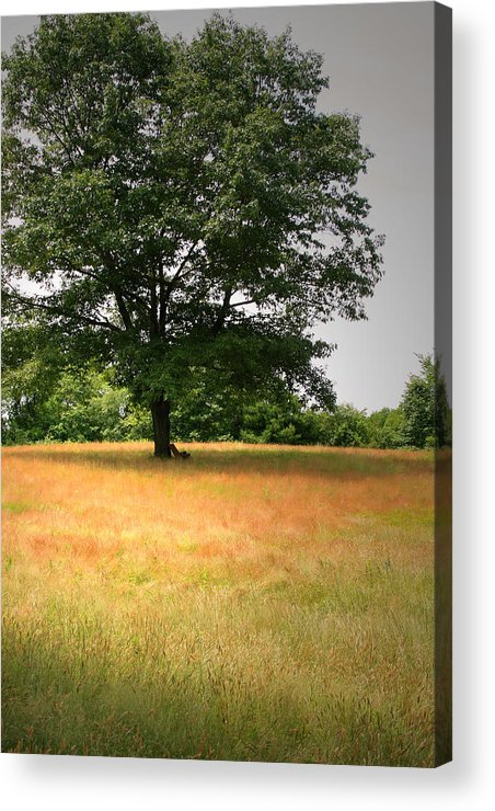 Minuteman National Historic Site Acrylic Print featuring the photograph First Shots by Brian M Lumley