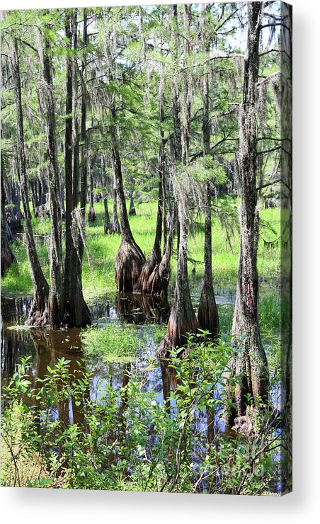 Trees Acrylic Print featuring the photograph Florida Swamp by Carol Groenen