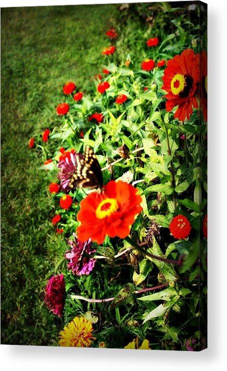 Flower Acrylic Print featuring the photograph Flower Dance by Jill Tennison