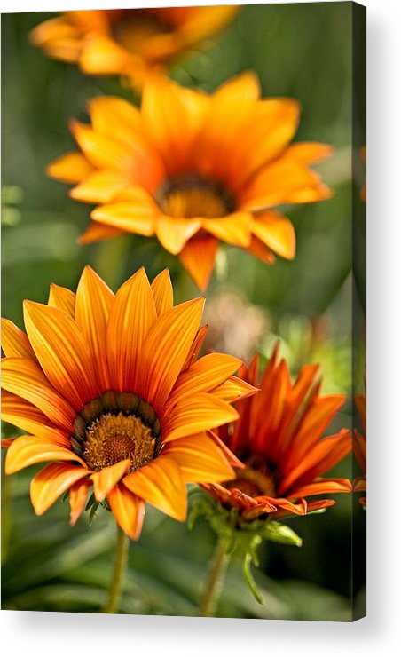 Floral Acrylic Print featuring the photograph Flowers by Carl Jackson