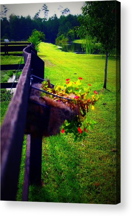 Nature Acrylic Print featuring the photograph Flowers On A Fence by Jill Tennison