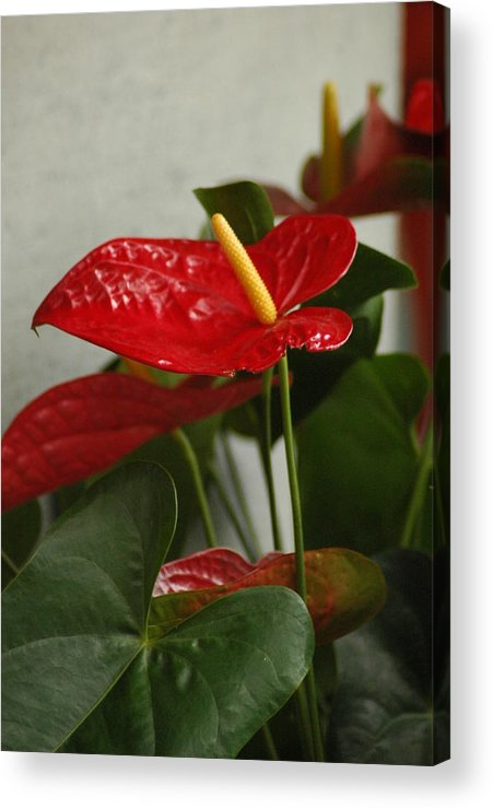 Foliage Acrylic Print featuring the photograph Flowers Rising by Lori Mellen-Pagliaro