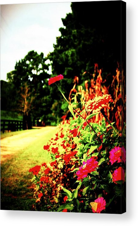 Flower Acrylic Print featuring the photograph Flowery Path by Jill Tennison