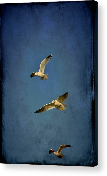Gliding Acrylic Print featuring the photograph Flying Seagulls by Anki Hoglund