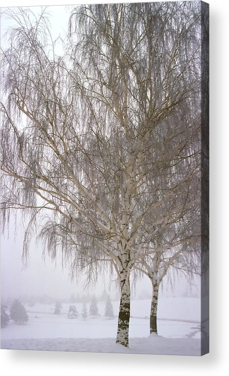 Nature Acrylic Print featuring the photograph Foggy Morning Landscape 12 by Steve Ohlsen