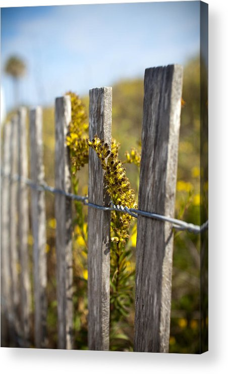 Wildflowers Acrylic Print featuring the photograph Folly Beach Wild Flowers by Dustin K Ryan