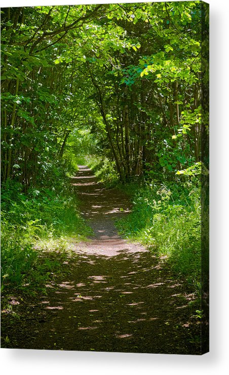 Corylus Acrylic Print featuring the pyrography Footpath Lined With Hazel. by Kathleen Smith