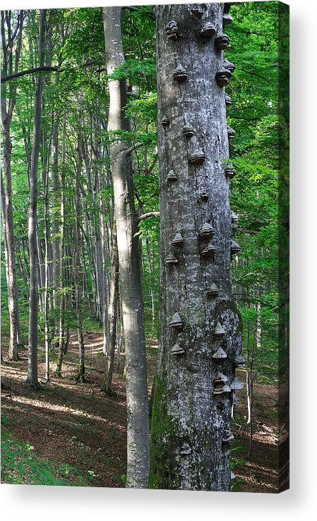 Forest Acrylic Print featuring the photograph Forest by Elisa Locci
