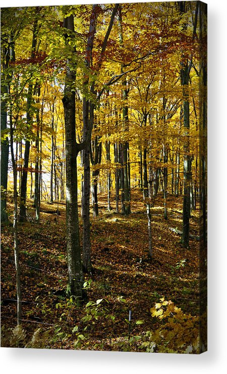 Trees Acrylic Print featuring the photograph Forest Floor One by Tim Nyberg