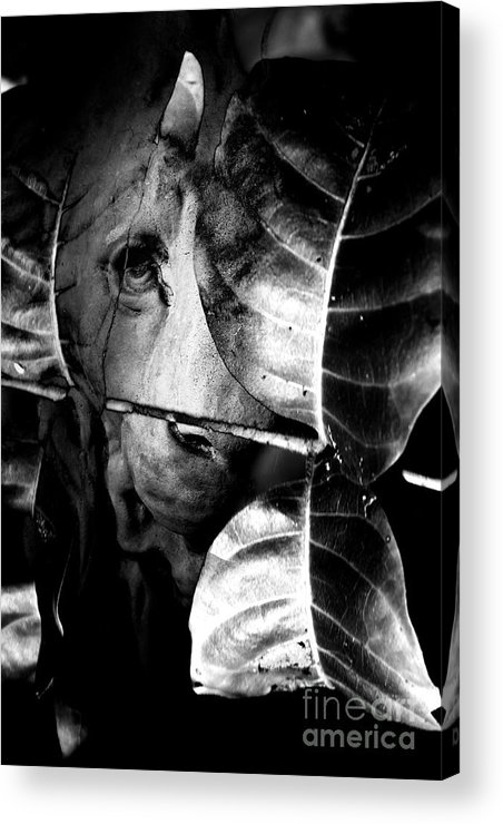 Lion Acrylic Print featuring the photograph Forest Of The Labyrinth Lion by Jorgo Photography - Wall Art Gallery