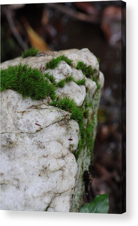 Rock Acrylic Print featuring the photograph Forest Rock With Moss by Pamela Smith