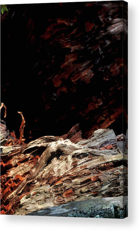 Tree Acrylic Print featuring the photograph Forrest Art by William Jones