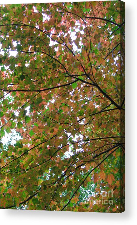 Tree Acrylic Print featuring the photograph Free Fall by Jessica Boone
