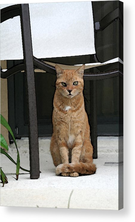 Cat Acrylic Print featuring the digital art Friendly Cat In Key Largo by Christopher Purcell
