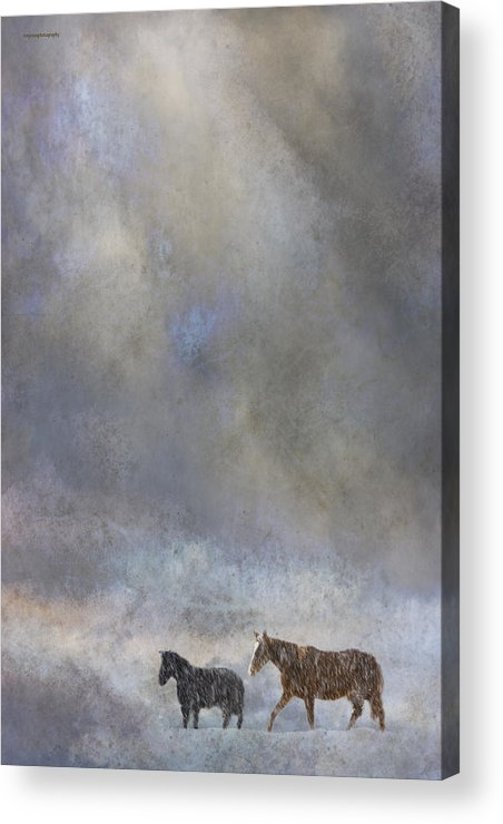 Winter Acrylic Print featuring the photograph Going To Barn by Ron Jones