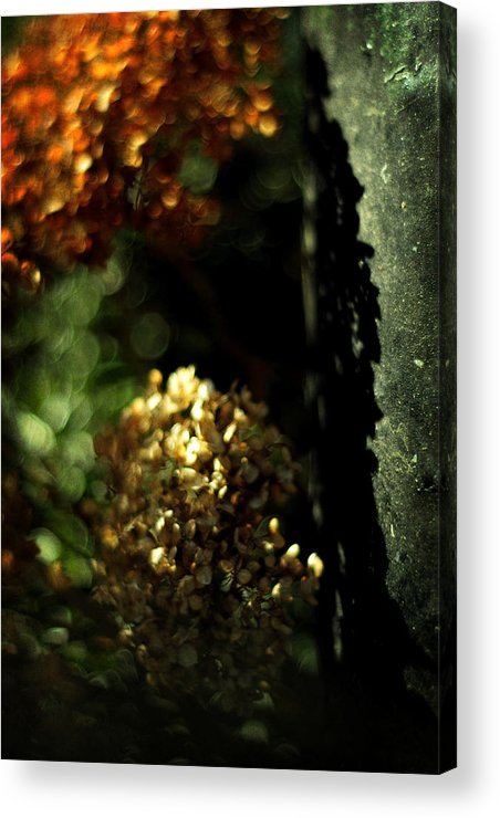 Hydrangea Acrylic Print featuring the photograph Grandmother's Jewels by Rebecca Sherman